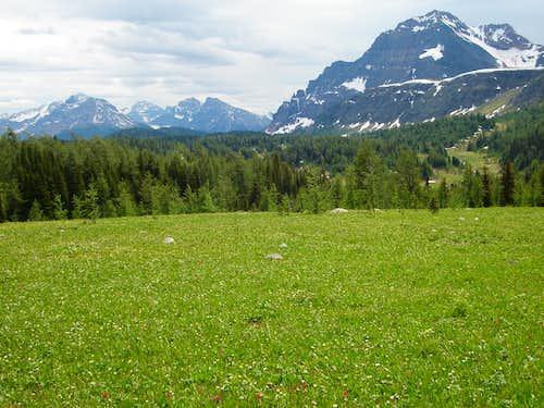Meadows near Healy Pass