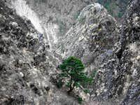 Lone Tree In Himalayan Limestone Ravine