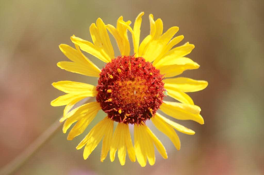 Flower along Sugarloaf Trail