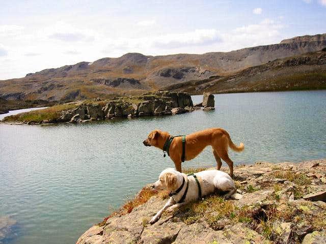 My dogs Sopris and Raymond...