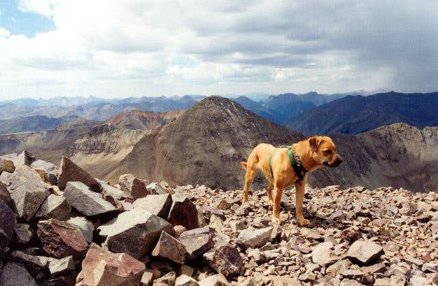 My dog Sopris on Jones...