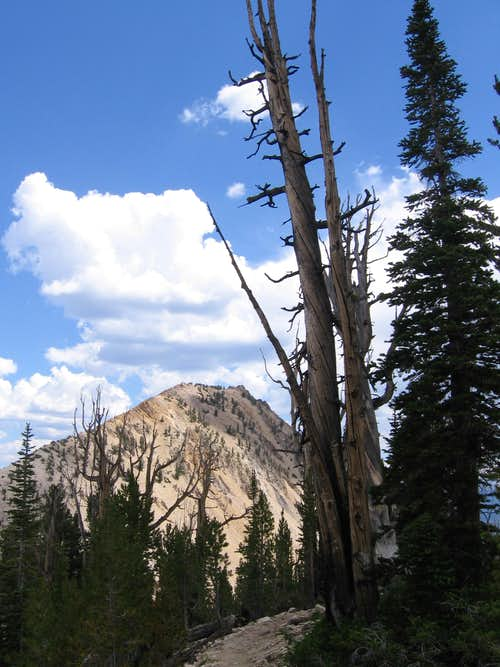 Imogene Peak and dead tree