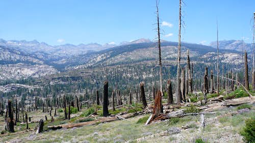 Burned out forest above Reds Meadow