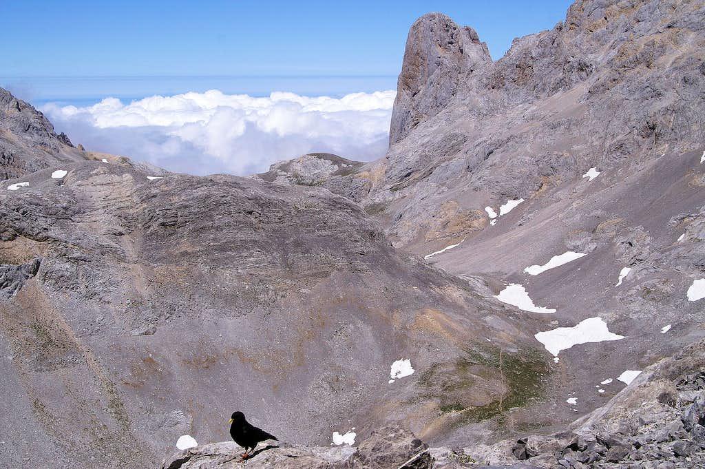 Naranjo de Bulnes and the Alpine Chough