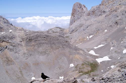 Naranjo de Bulnes and the Alpine Chough