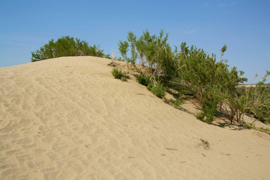 Red Lake Dunes