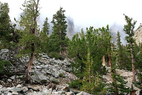 Wheeler Peak Campground