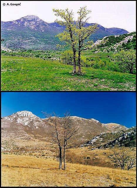 Pricatrnja Polje seasons