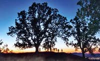 A large oak tree with the...