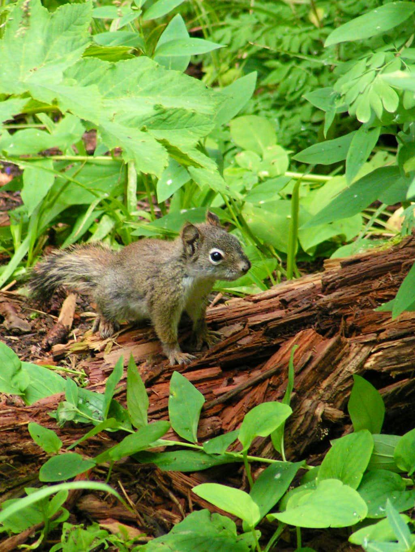 a Boisterous Grand Mesa Squirrel