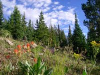 Subalpine Meadow on Mt. Massive