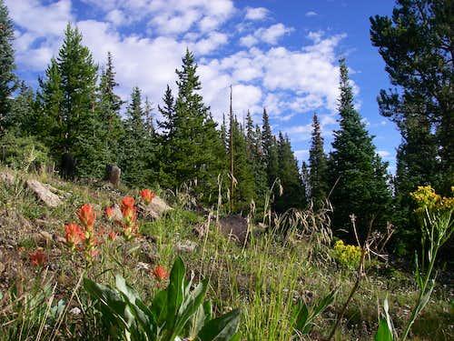 Subalpine Meadow on Mt. Massive