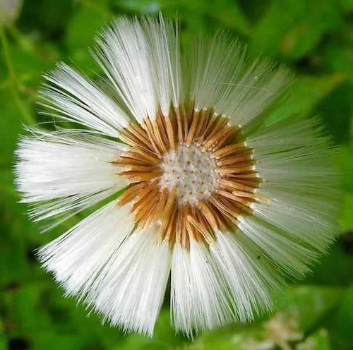 Goodbye flower