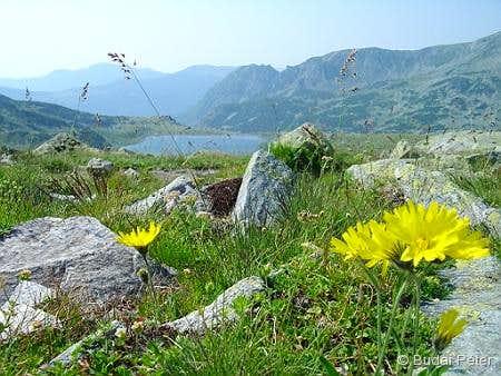 Flowers en route to Bucura peak