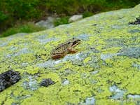 Frog by the Bucura Lake