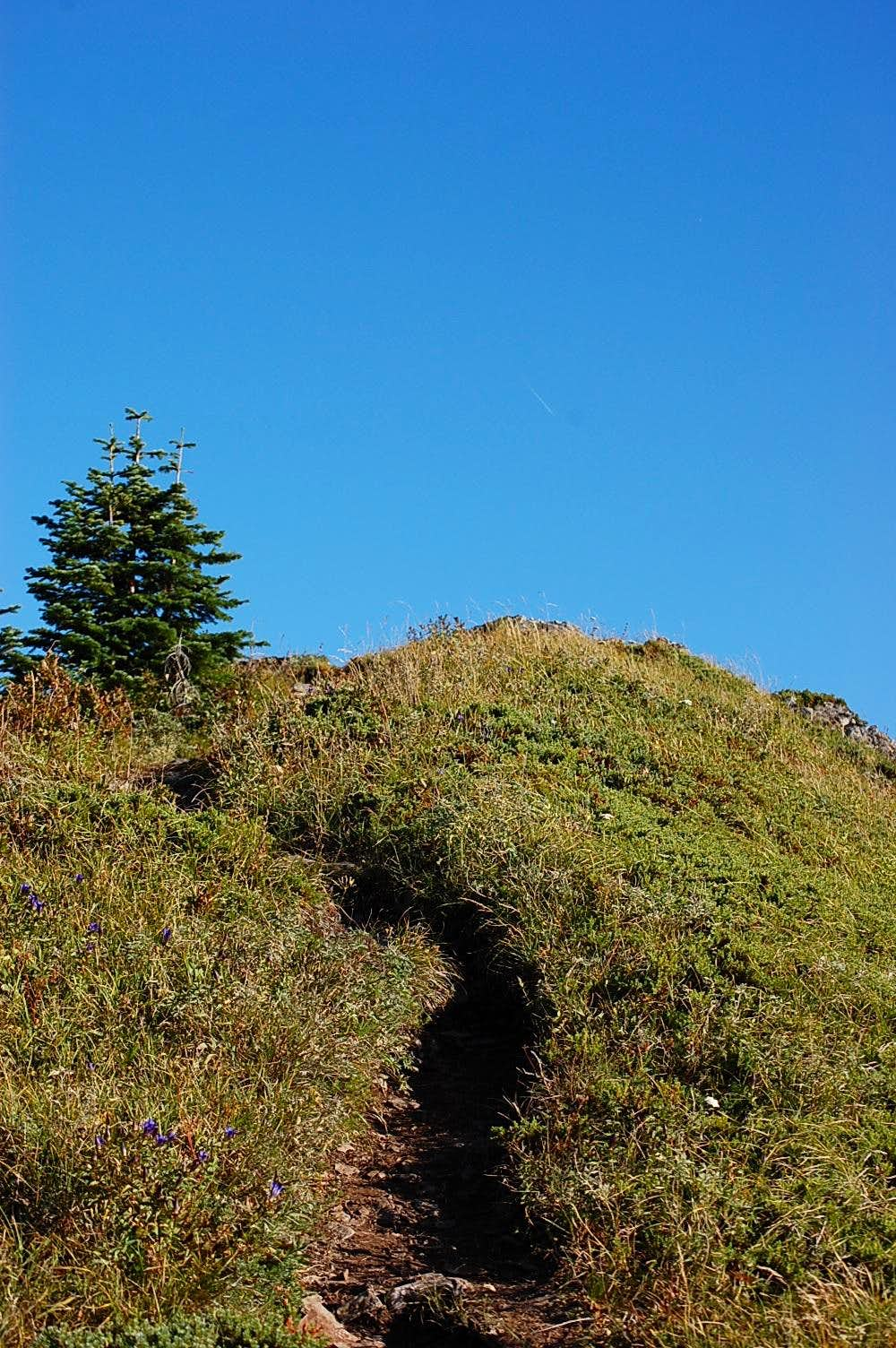 The last 25 feet to the summit of Chinidere Mt.