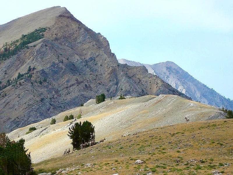 Bighorns and WCP-6