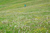 Miles of flowers