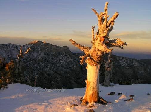 Last rays of the setting sun on Griffith Peak