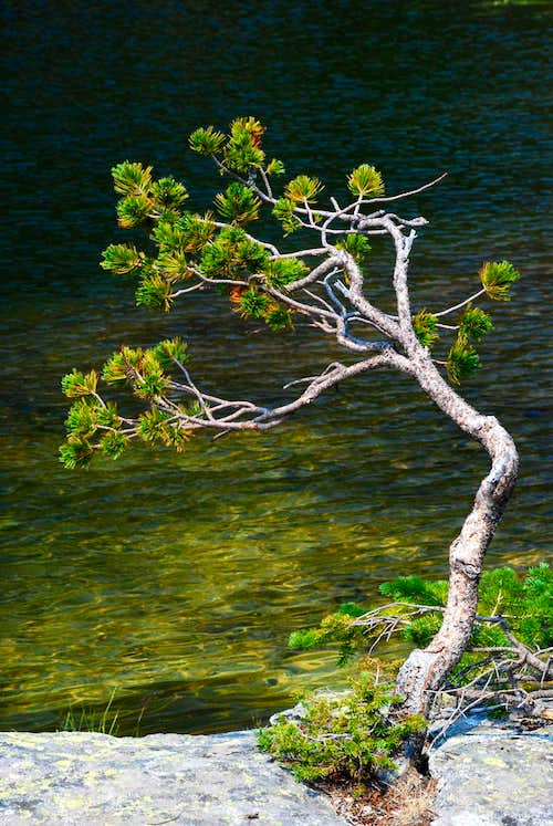 Baker Lake Tree - Vertical