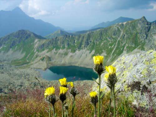 Flowers on Orla Perć
