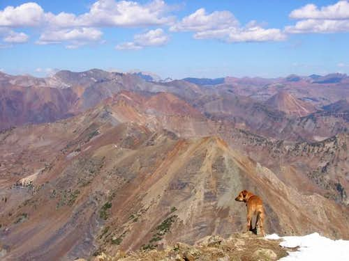 My dog Sopris on Mount Owens...