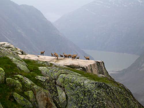 Stonebucks near Lauteraar hut