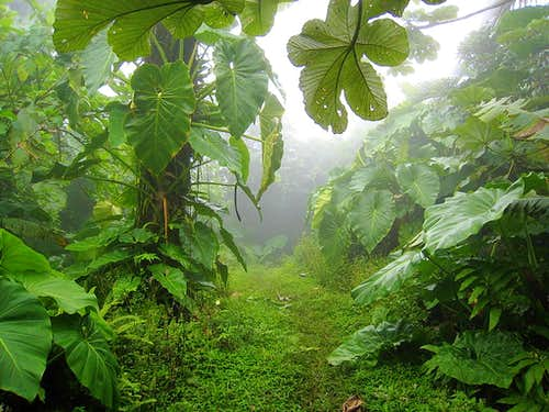 Mt Scenery Trail