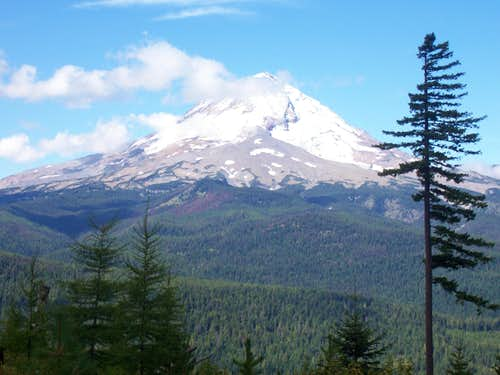 Mt Hood from the Horse Trail