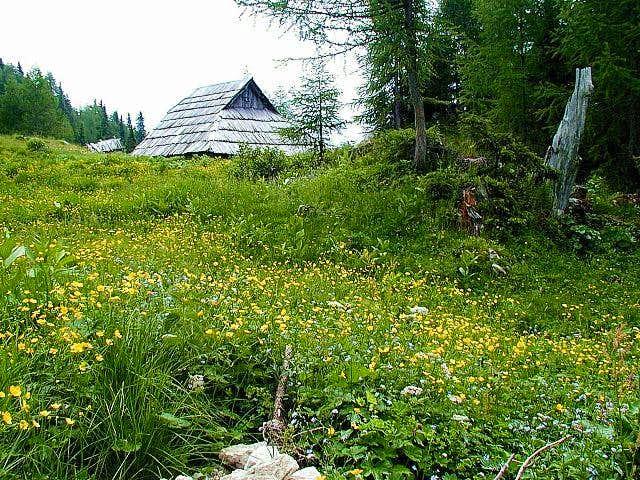 Planina Krstenica in summer....