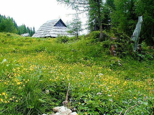 Planina Krstenica in summer....