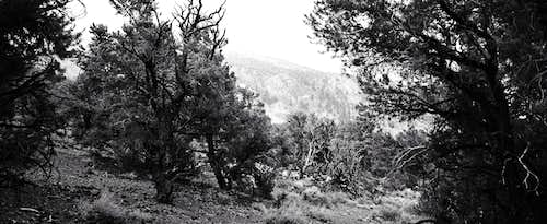 Trees Lining Upper Silver Canyon