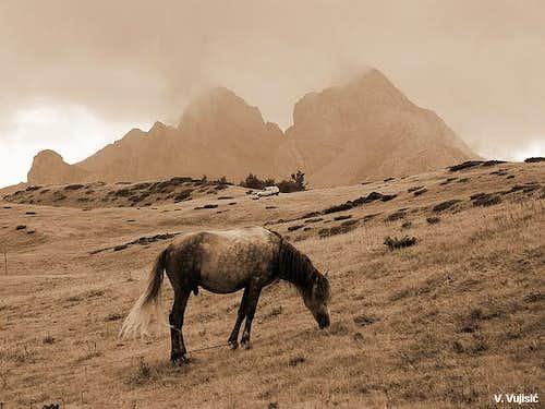 Horse on Stavna