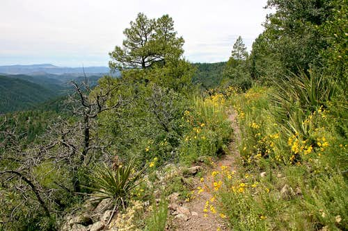 Black Range Crest Trail