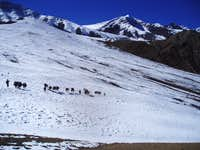 Stok Kangri Mule Train