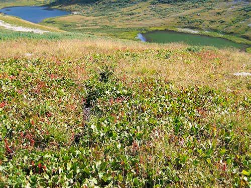 Alpine Tundra & Lakes