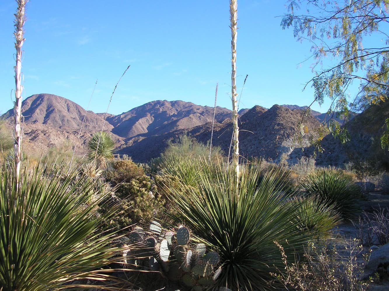Yucca plants : Photos, Diagrams & Topos : SummitPost
