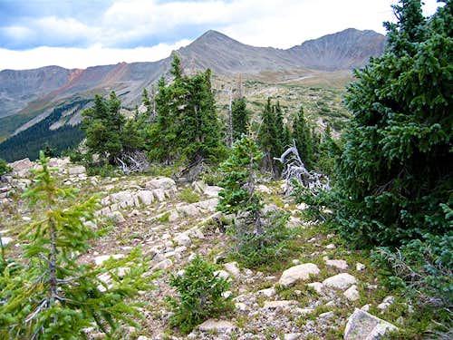 Pomeroy & dwarfed pines