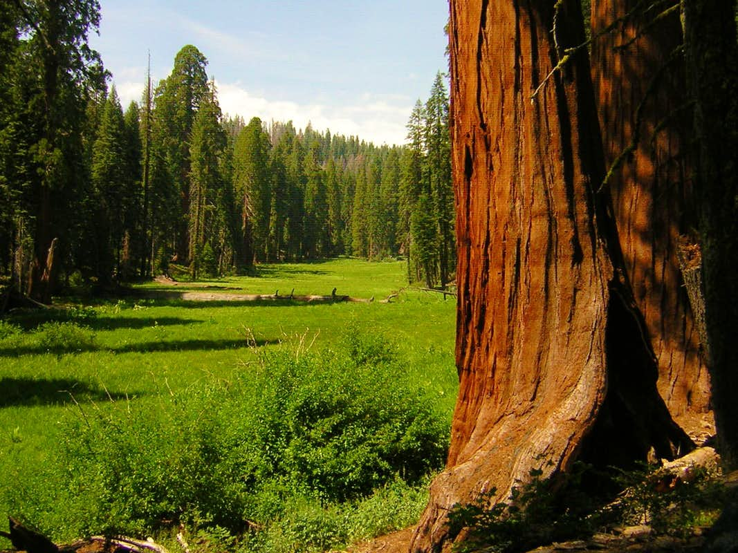 sequoia national park single parent personals Sacramento and california's central valley the giant sequoia trees in sequoia national park and california's central valley gay friendly and.