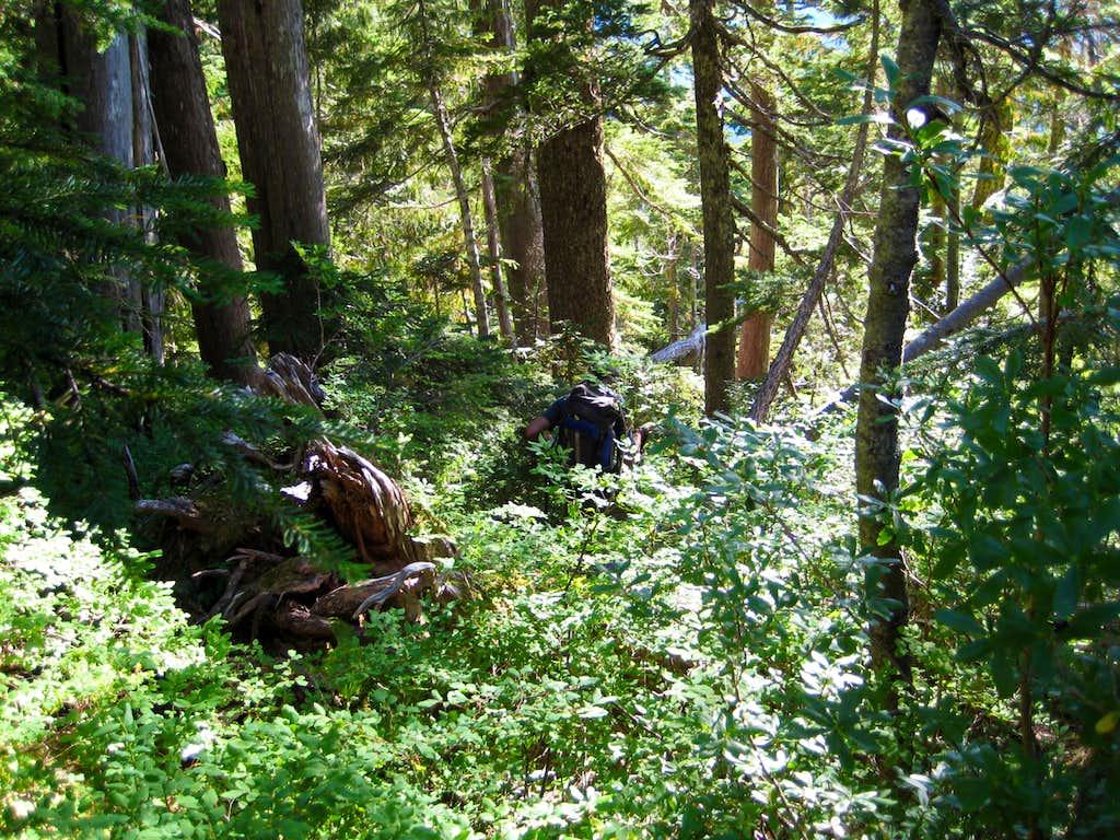 Pinder Peak; Bushwhack descent