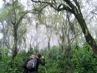 Rain Forest on Bisoke