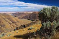 Deschutes River Canyon