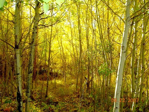 Bear Mountain Trail Aspen Gold