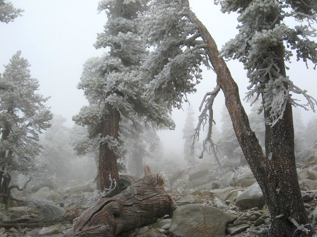 Near Jepson Peak, San Gorgonio Wilderness