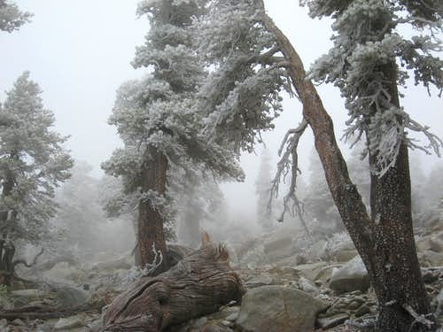 Near Jepson Peak, San Gorgonio Wilderness