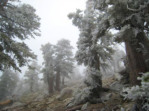 San Gorgonio Wilderness near Jepson Peak