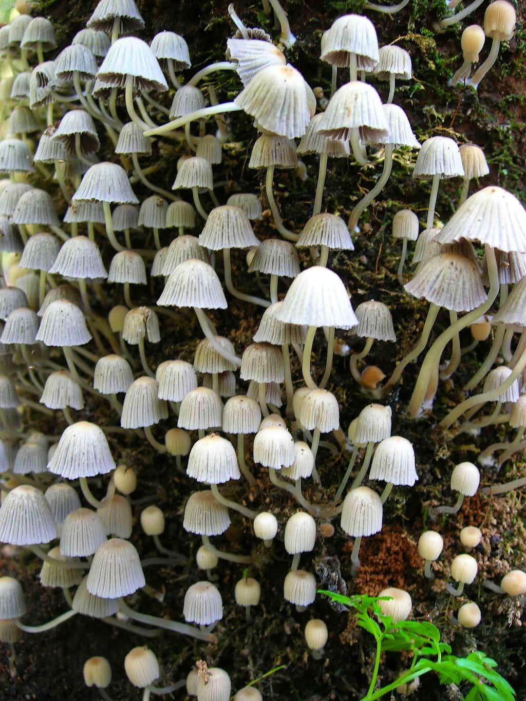Mushroom Explosion