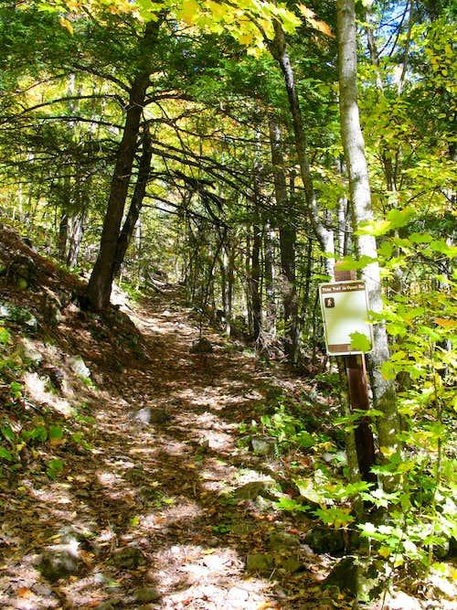 Trail up Norwich Bluff