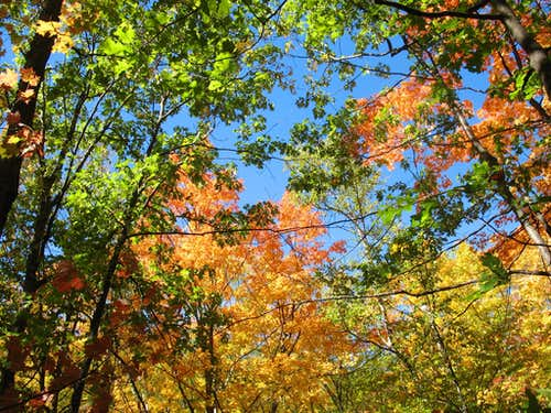 Colored Canopy