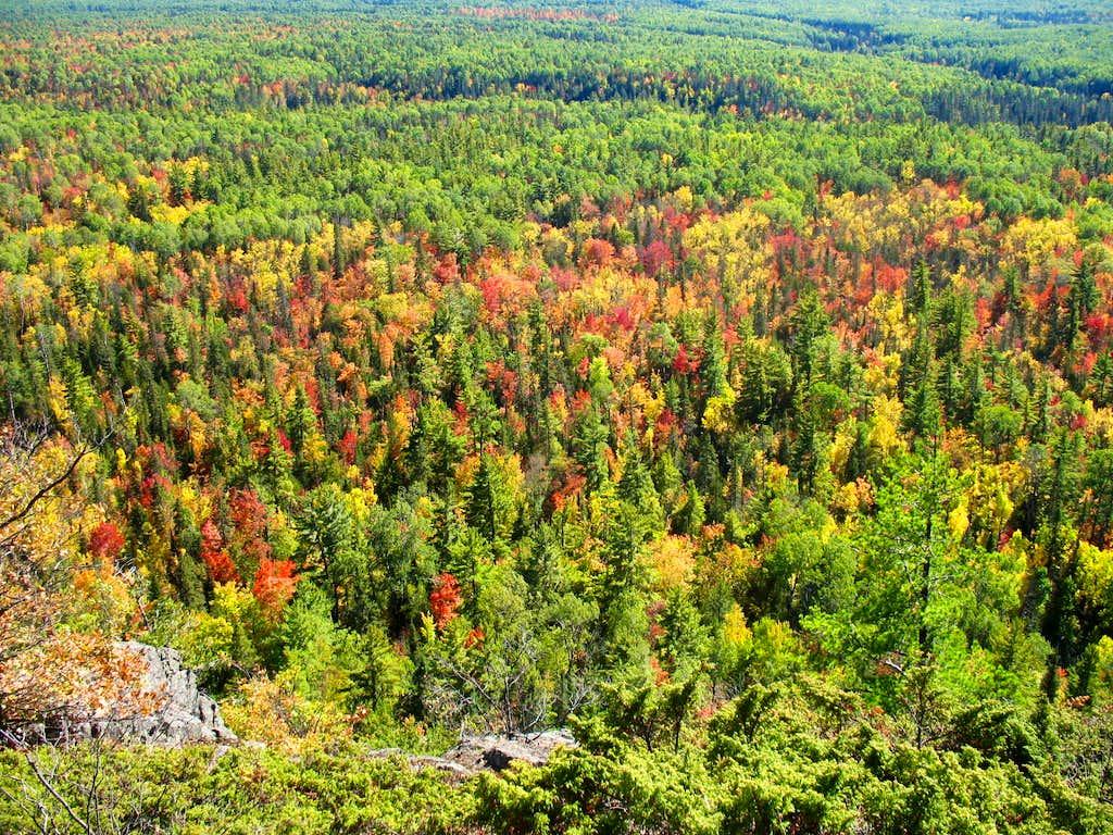 Northern Hardwood Forest